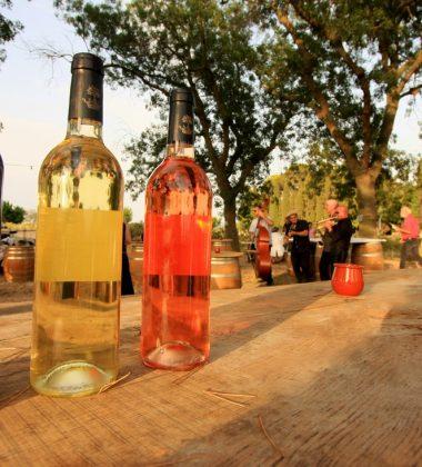 Les vins bio et nature